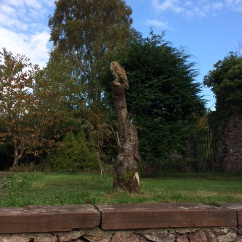 Wooden Owl Carving at Muncaster Castle
