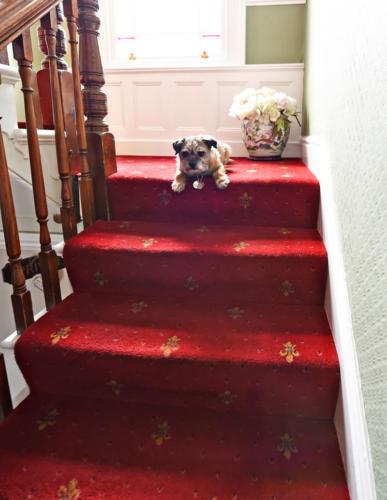 Tara on the stairs