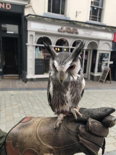 Holding the owls in Keswick Market